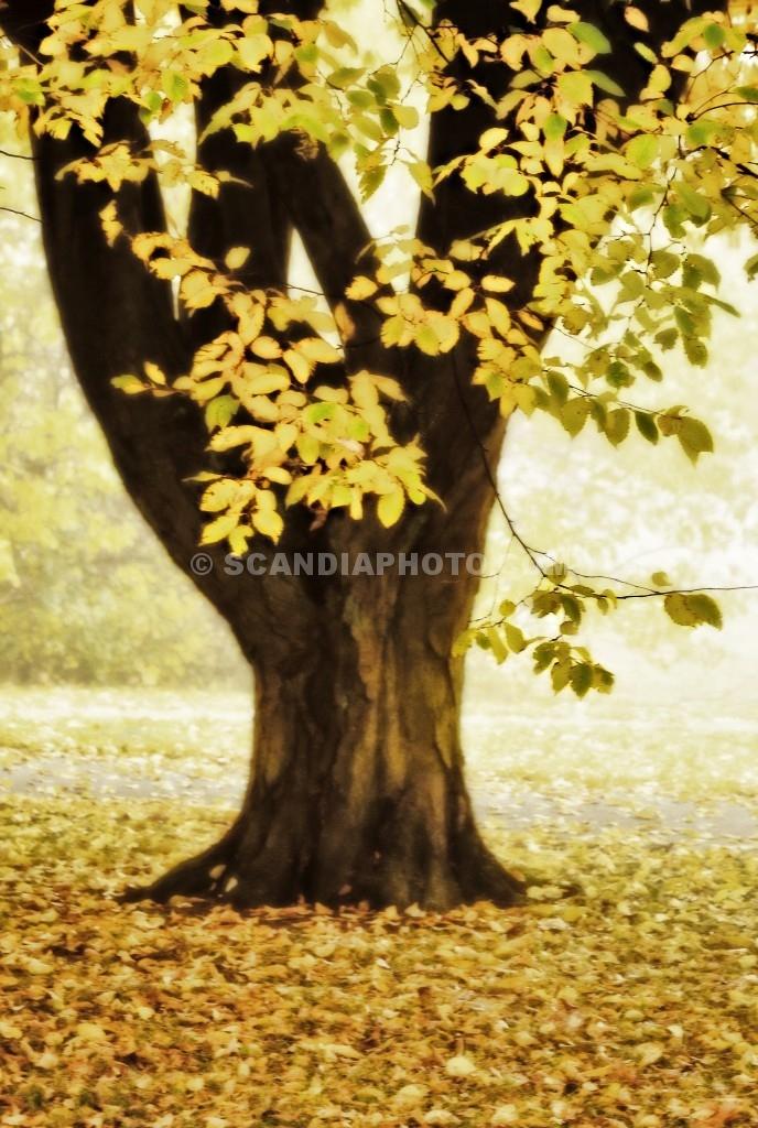 Höstträdet