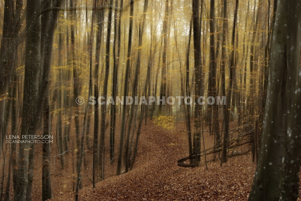 Stigen i skogen