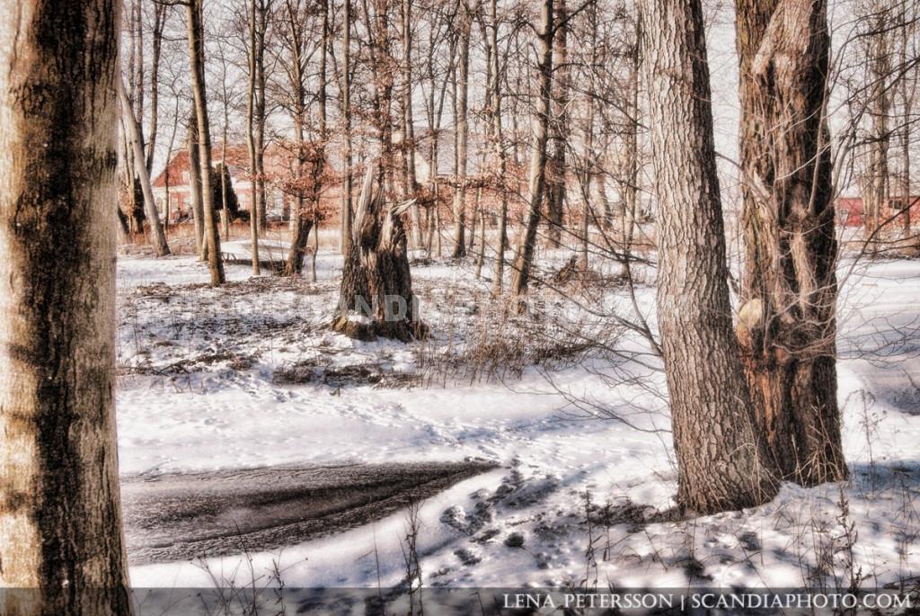 Vinterträd och is
