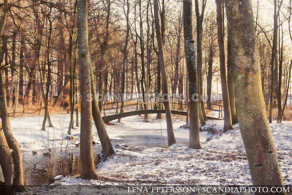 Träden och bron i snö