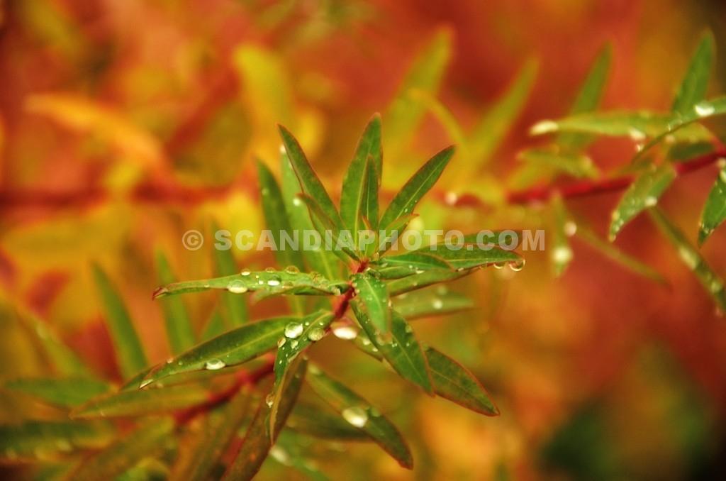 Färgprakt om hösten