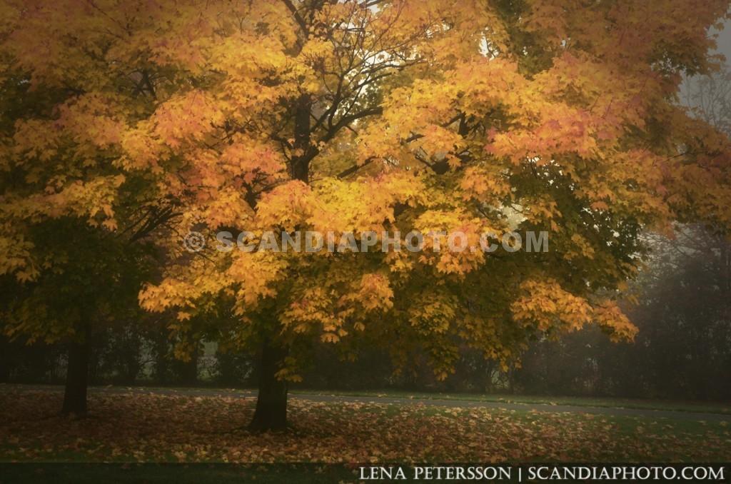 Trädet i dimman