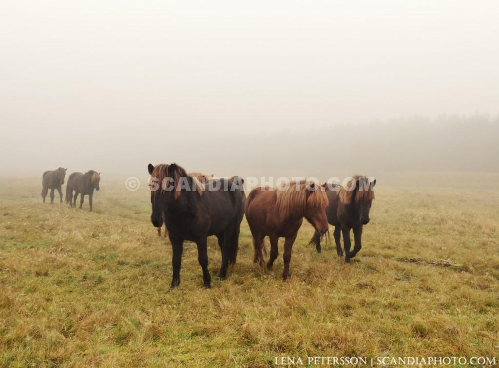 Hästarna på väg