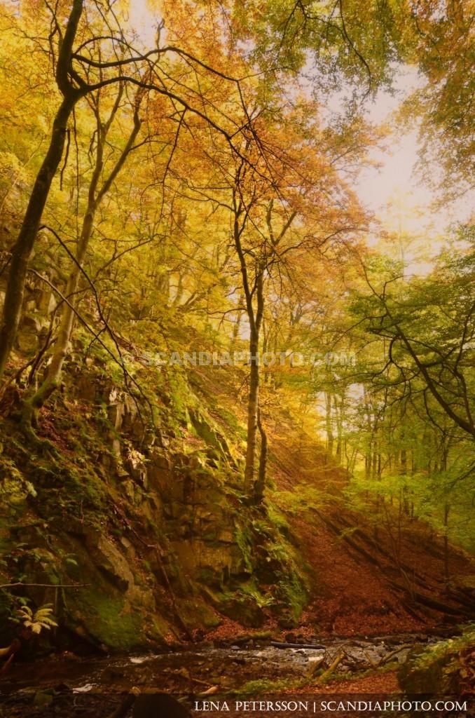 Dalgång i skogen
