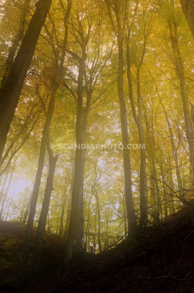 Soldis och träd