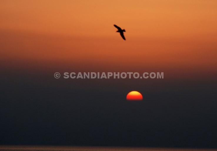 Att Flyga i Solnedgången