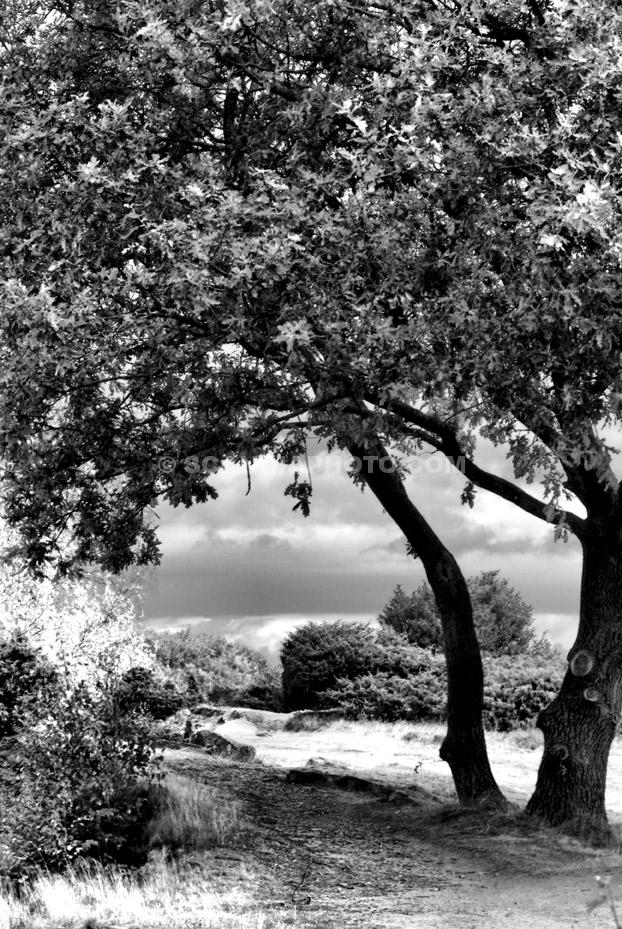Trädet vid Stenbrottet
